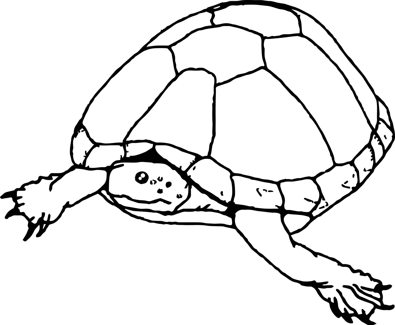 tortoise turtle go sea coloring page wecoloringpage