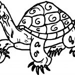 Tortoise Turtle Line Coloring Page