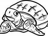 Tortoise Turtle Look Coloring Pages