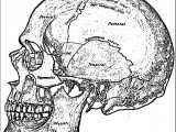 700 Of Skull Picture Sketch Drawing Coloring Page