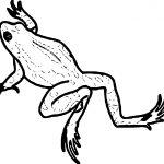 Amphibian Frog Walk Coloring Page