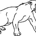 Angry Attack Tiger Coloring Page