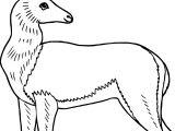 Antelope Deer Coloring Page