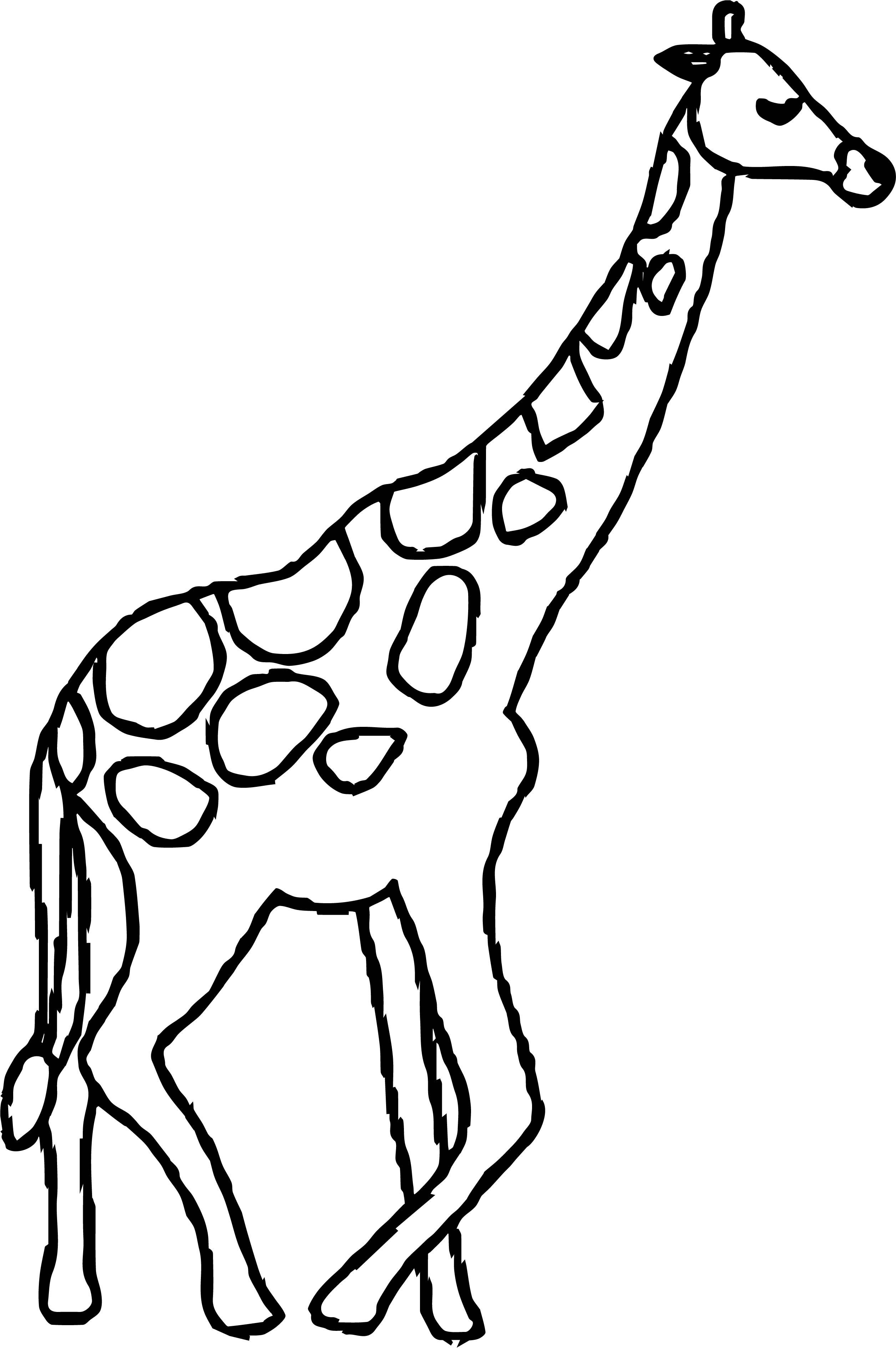 Giraffe Calm Coloring Page