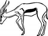 Antelope Drawing Coloring Page