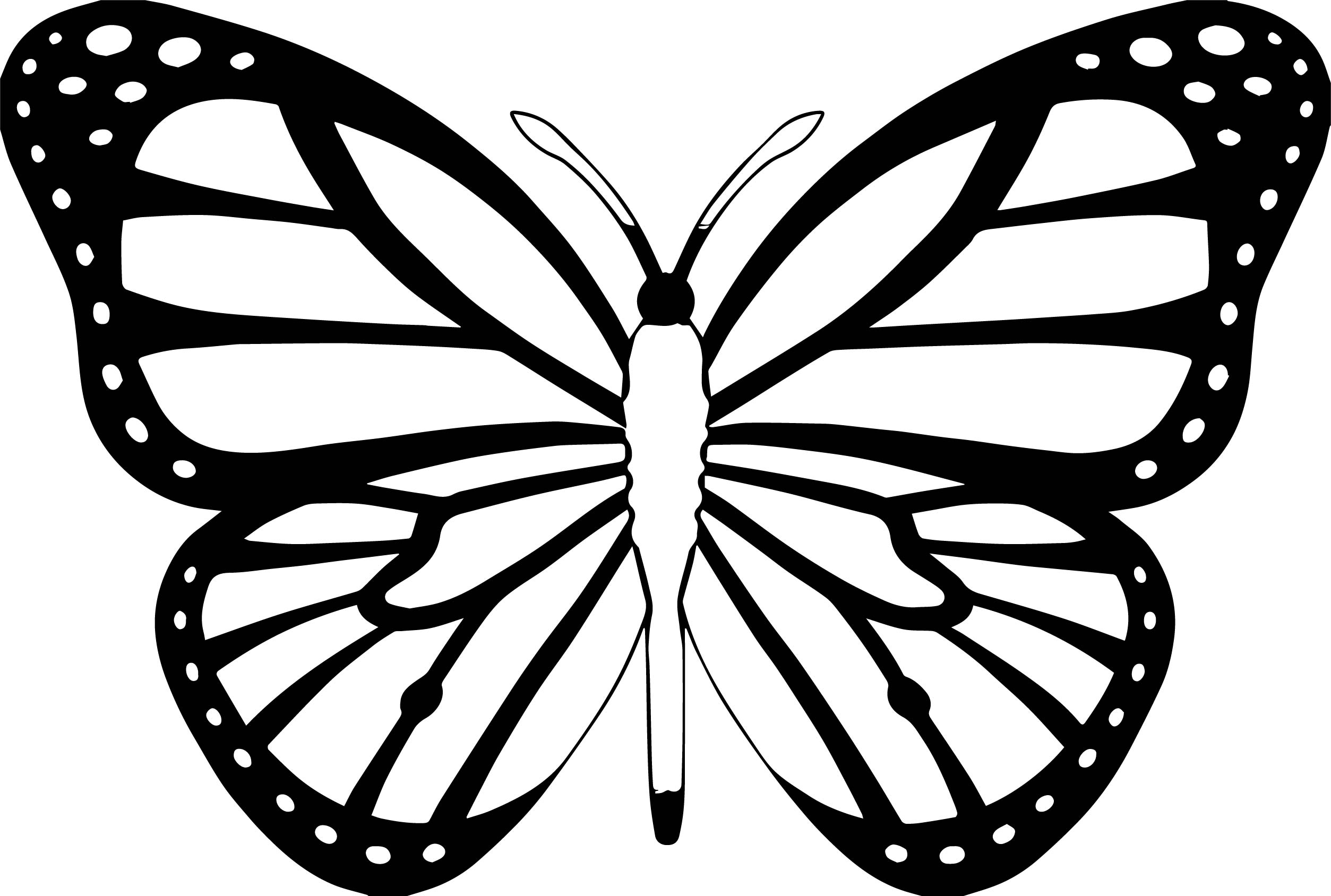 Any Butterfly Animals Clean Coloring Page