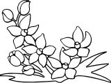 Any Flower Free Coloring Page