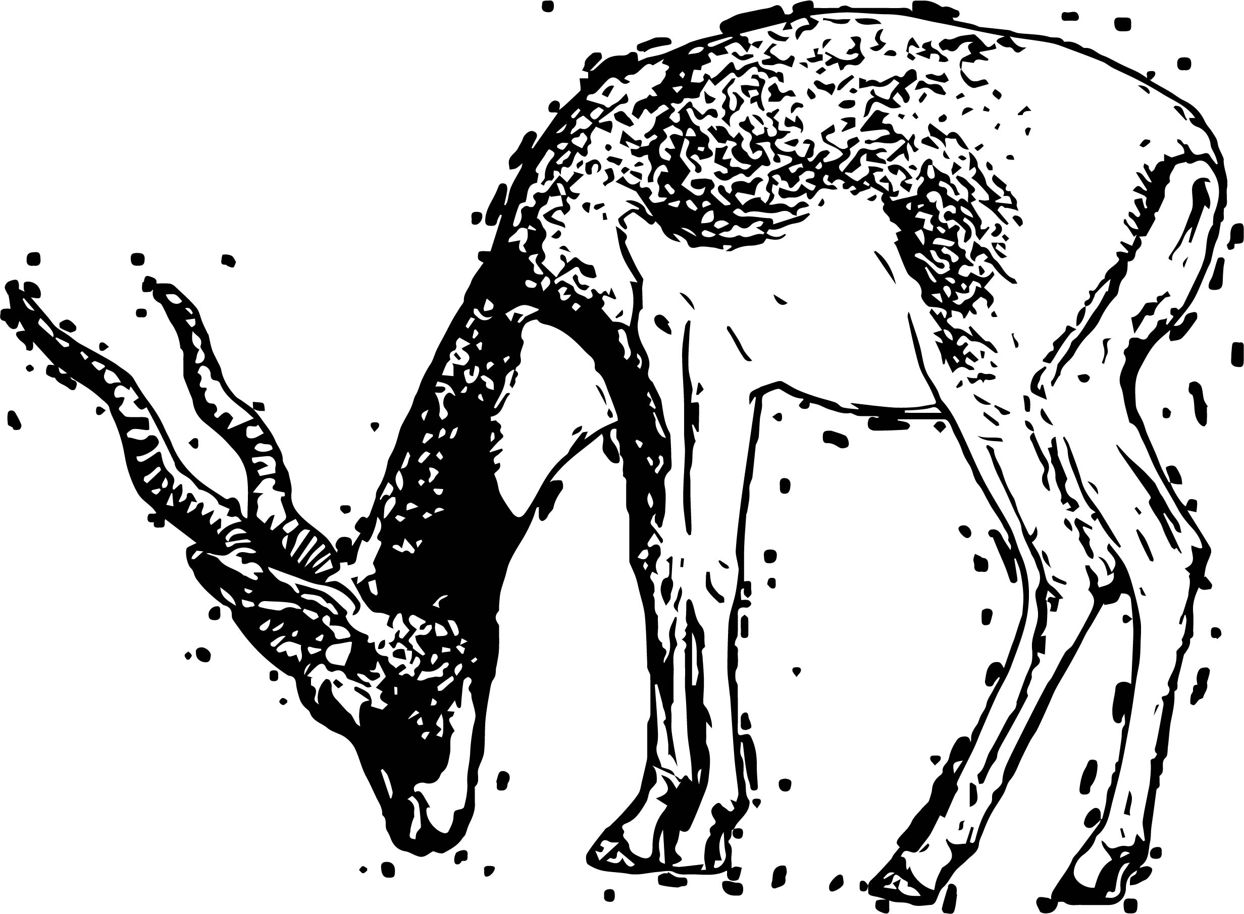 Sketch Antelope Coloring Page