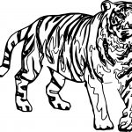 Tiger Look Coloring Pages