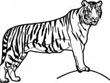 Waiting Big Tiger Coloring Page
