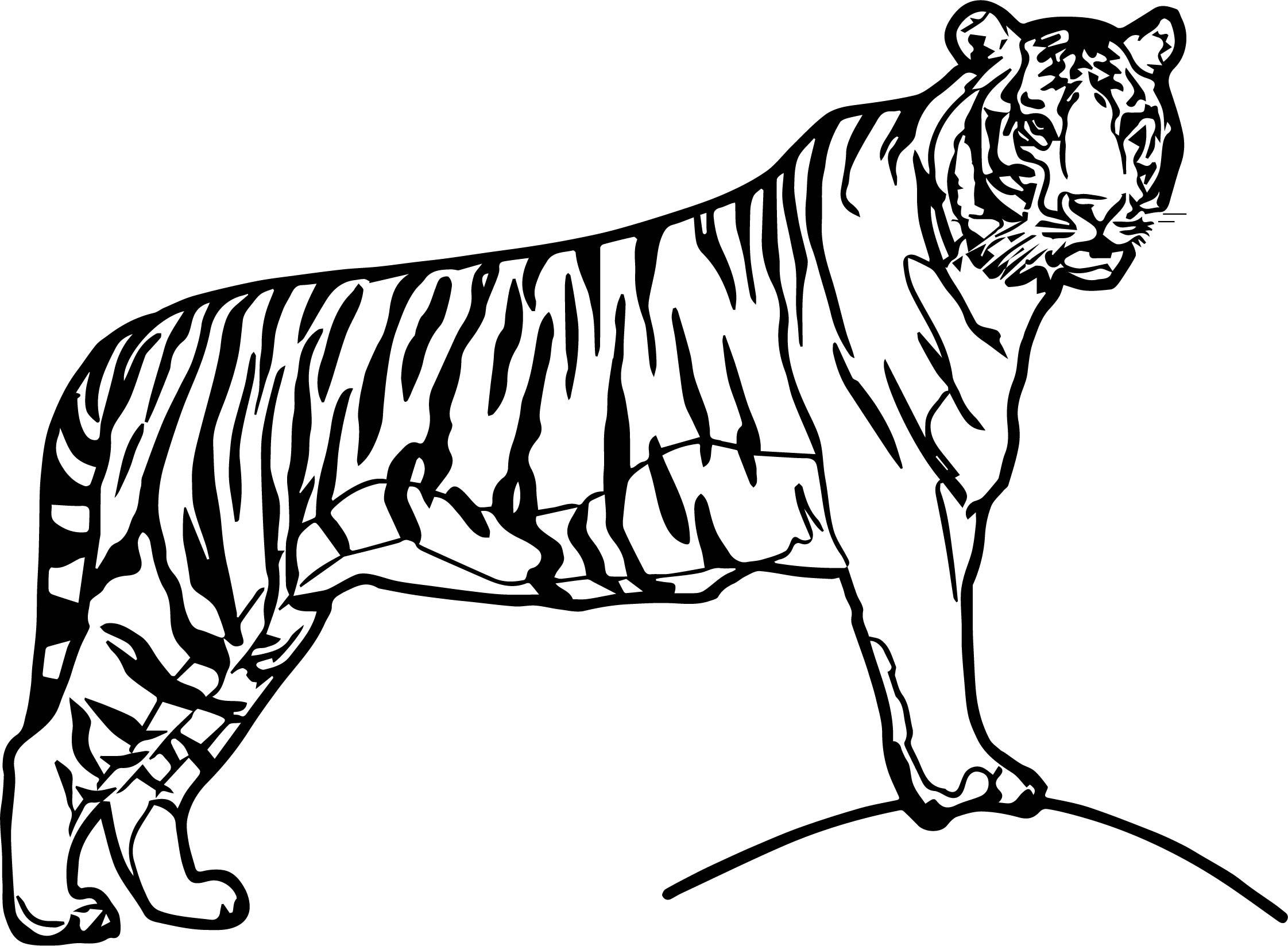 Waiting Big Tiger Coloring Page
