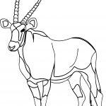 Walking Antelope Coloring Page