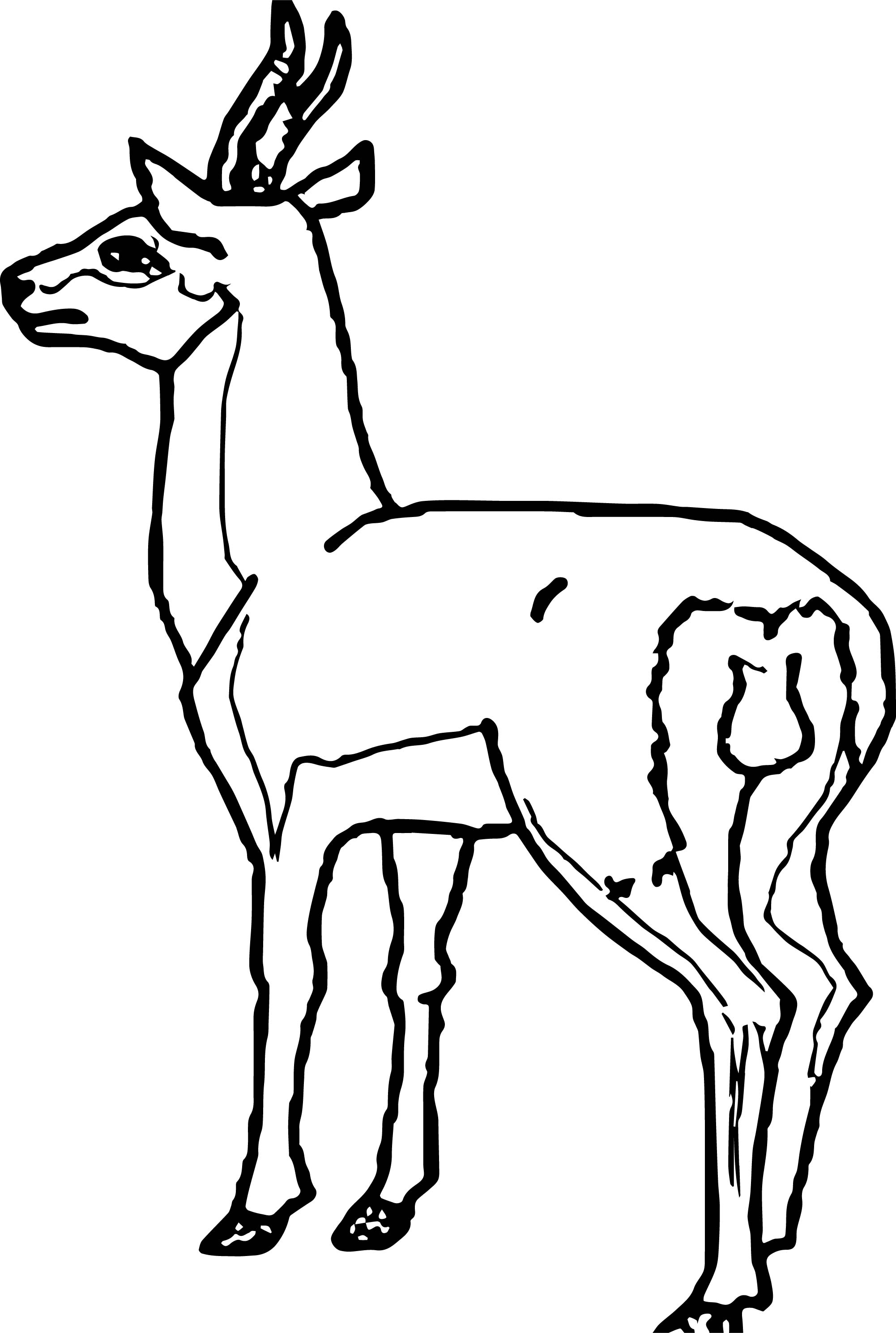 Antelope Back View Coloring Page