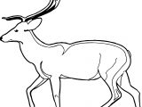Antelope Walking Side View Coloring Page