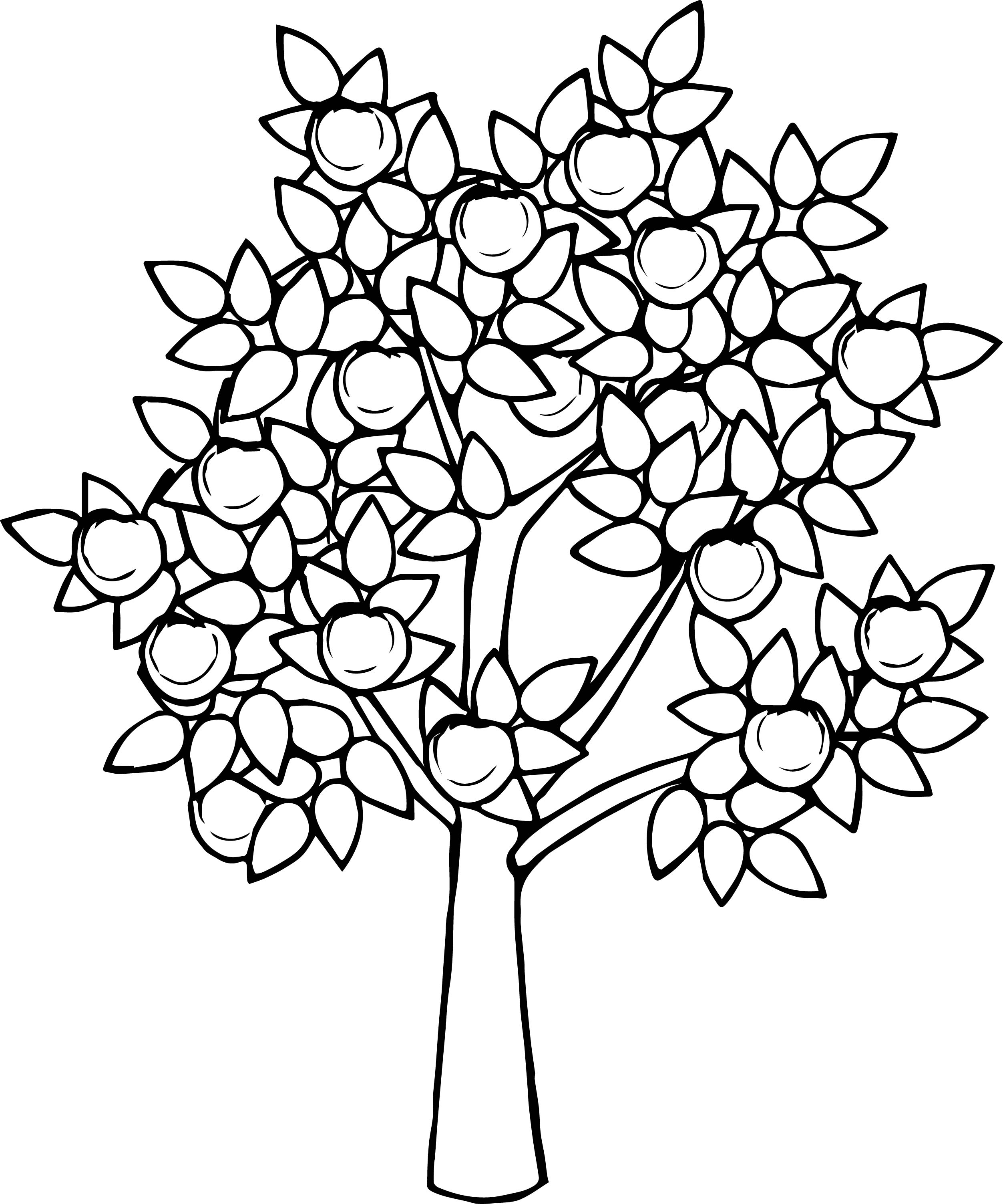 Bitter Apple Tree Coloring Page