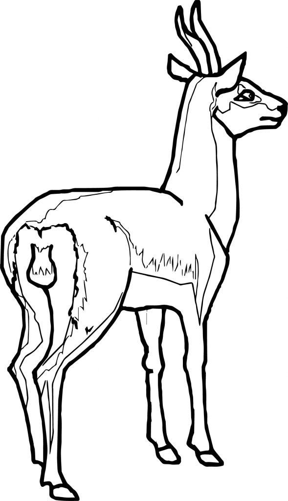 Gazelle Antelope Coloring Page
