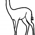 Gerenuk Animal Coloring Page