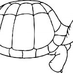 Happy Tortoise Turtle Coloring Page
