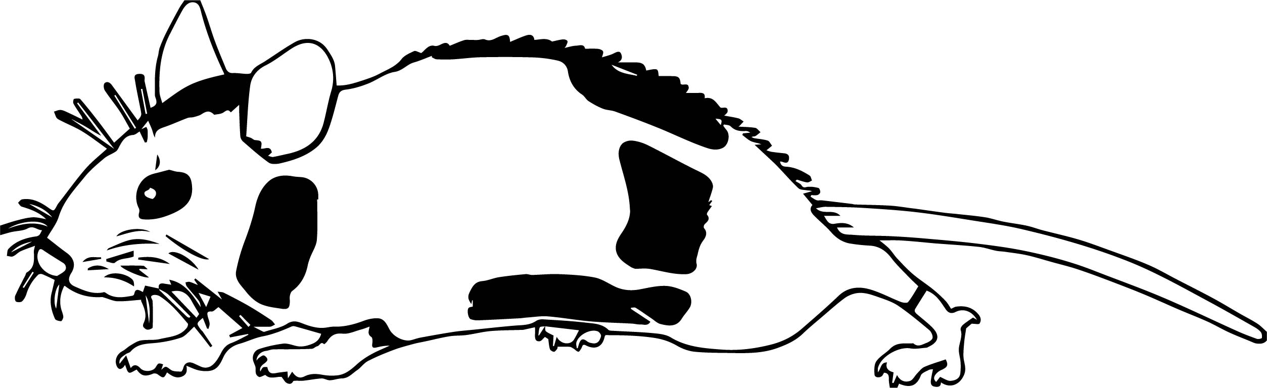 Mouse White Black Coloring Page