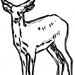 Standing Antelope Drawing Coloring Page