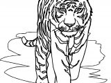 Tiger Front Walking Coloring Page