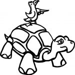 Tortoise Turtle And Bird Coloring Page