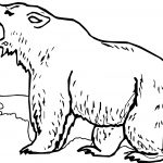 Grizzly Bear Yell Coloring Page
