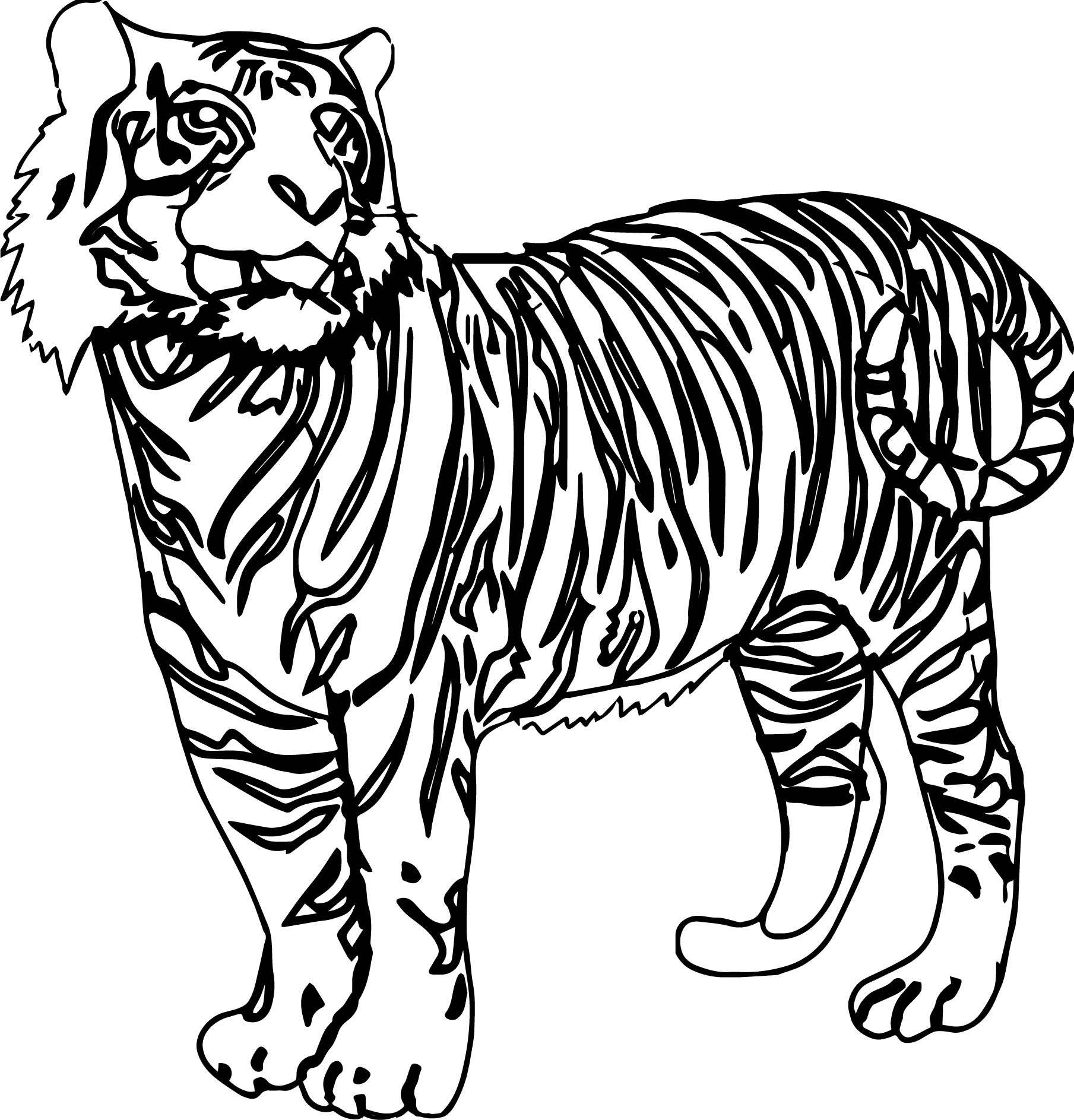 Looking Tiger Coloring Page