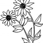 Black Eyed Susan Flower Coloring Page
