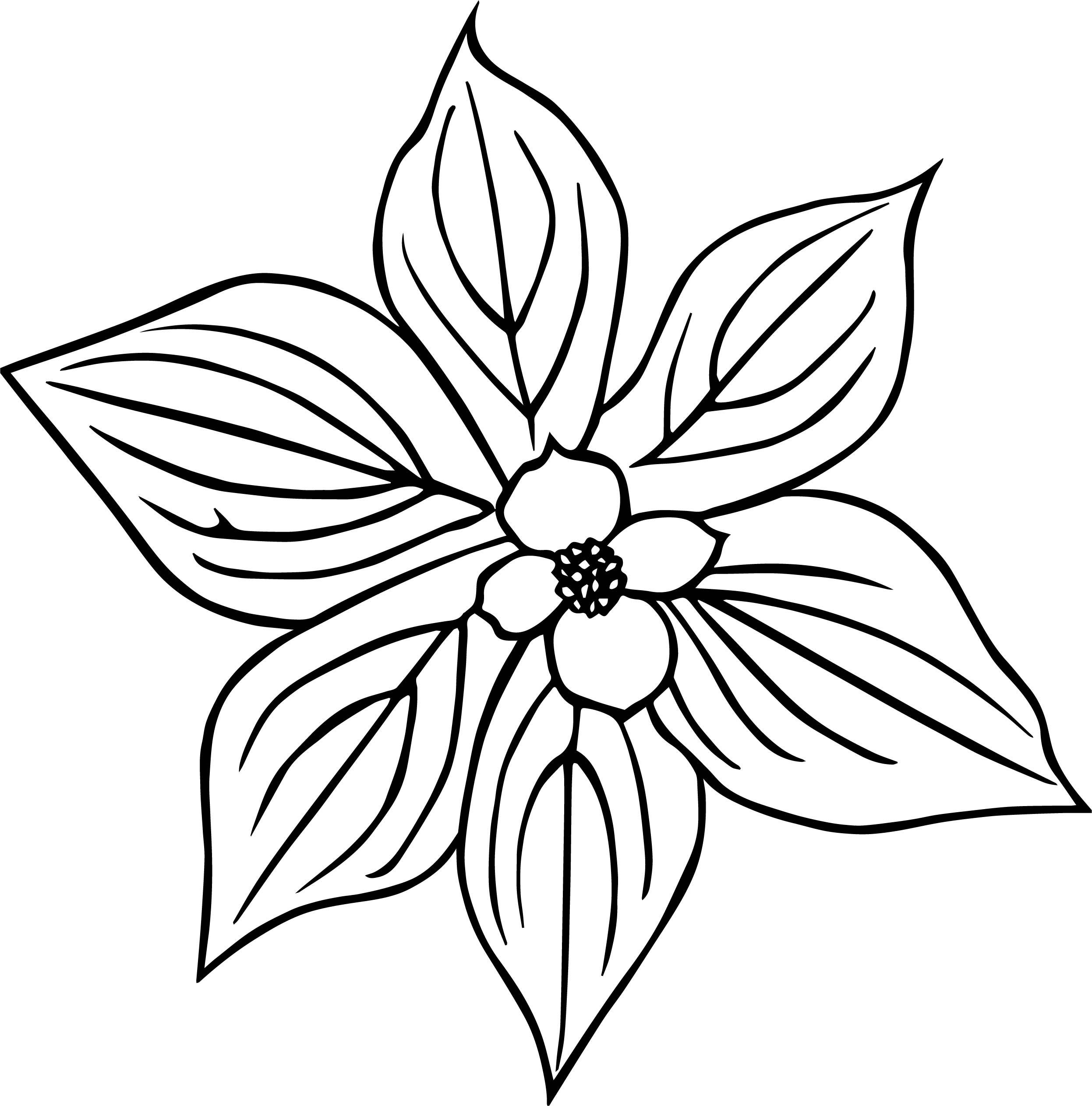 Cornus Canadensis Flower Coloring Page