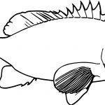 Realistic Cartoon Fish Coloring Page Sheet