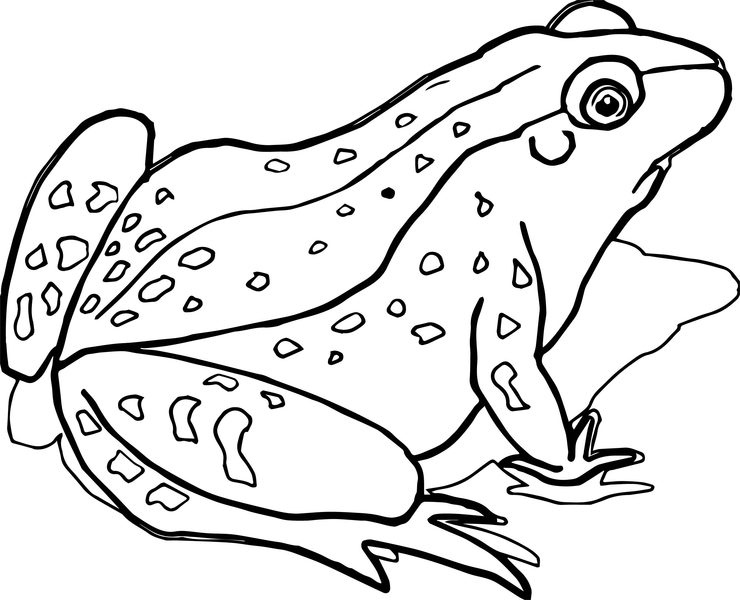 amphibian coloring pages | Amphibian Pages Realistic Coloring Pages
