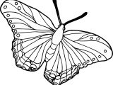 Beautiful Butterflies Colored Coloring Page