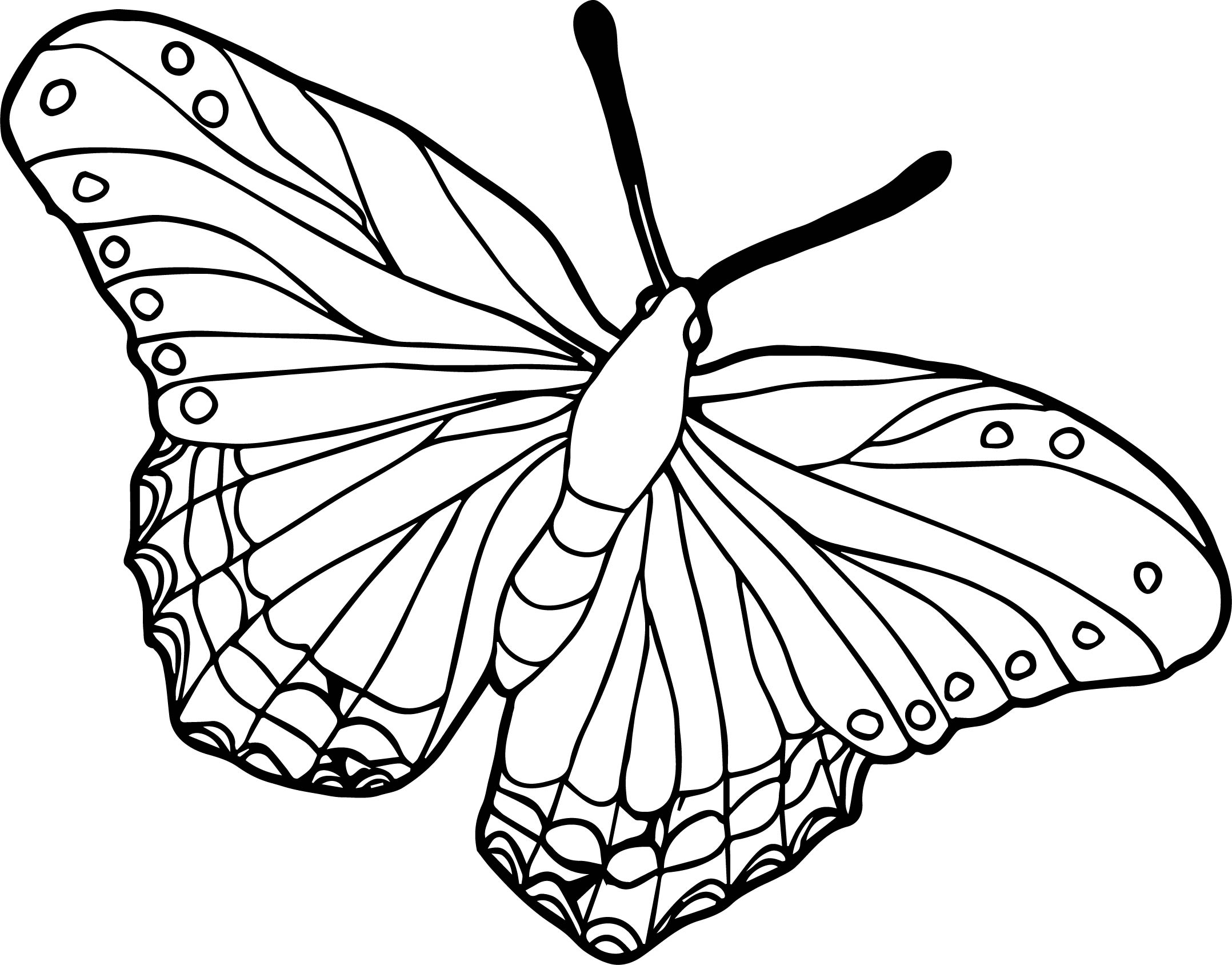 Beautiful butterflies colored coloring page for Beautiful butterfly coloring pages