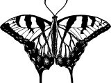 Butterfly Black White Good Coloring Page