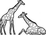 Giraffes Resting Coloring Page