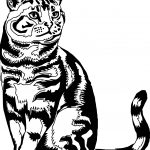 Realistic Cat Standing Coloring Page