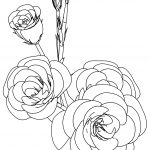 Rose Coloring Page Flower