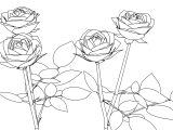 Rose Coloring Page Flowers