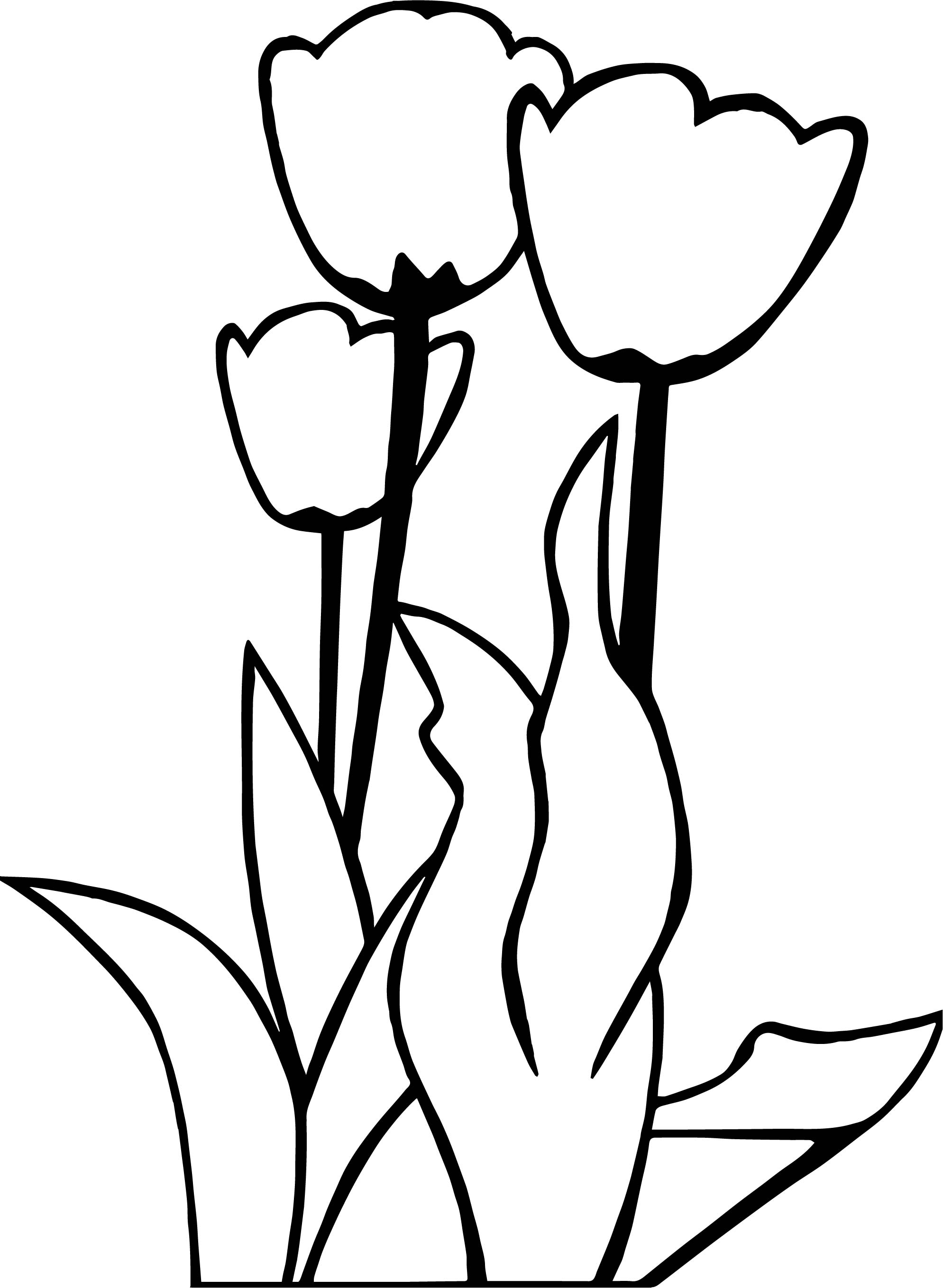 Tulips Flower Coloring Page