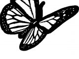 Butterfly And Shadow Coloring Page