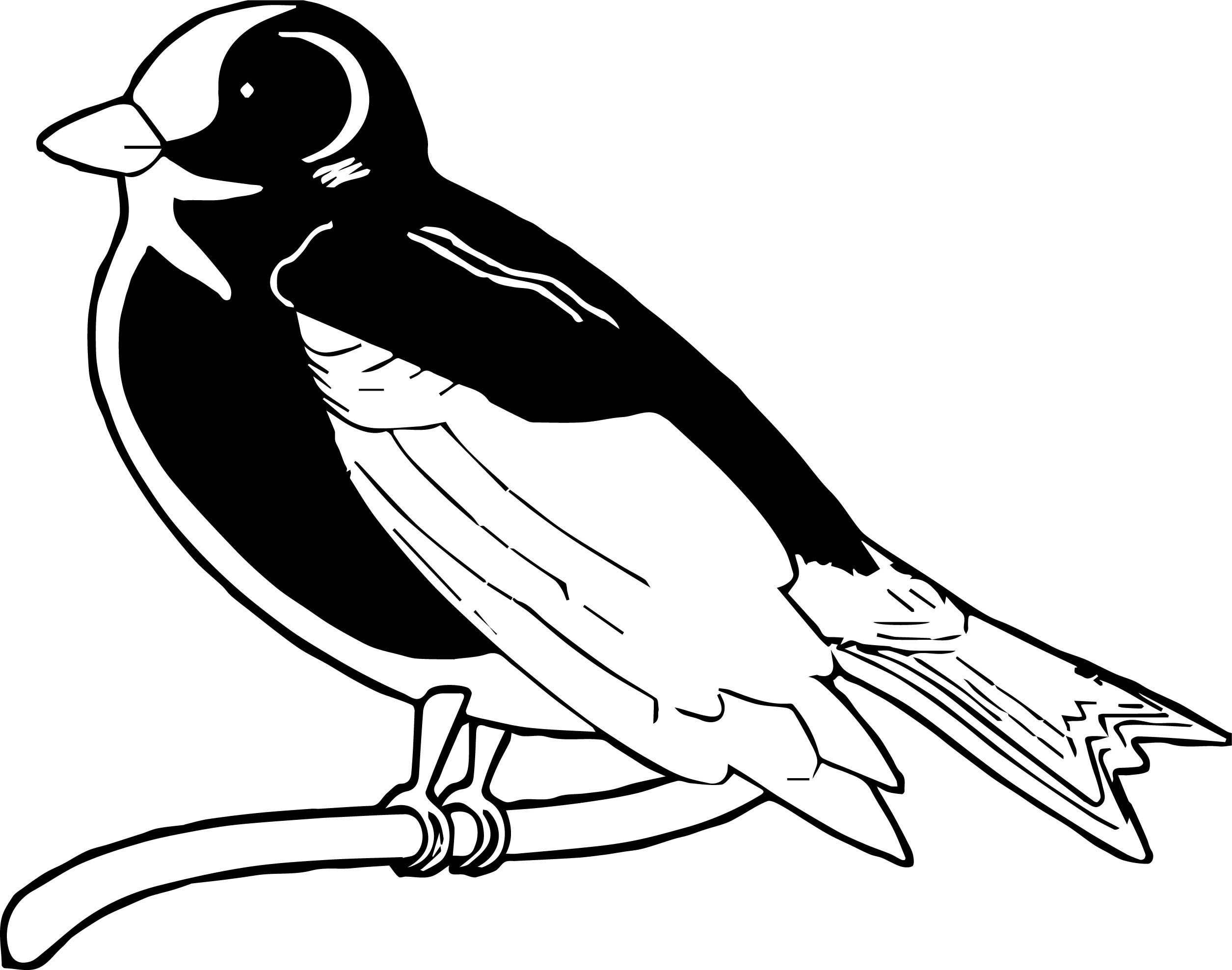 Can Bird Coloring Page