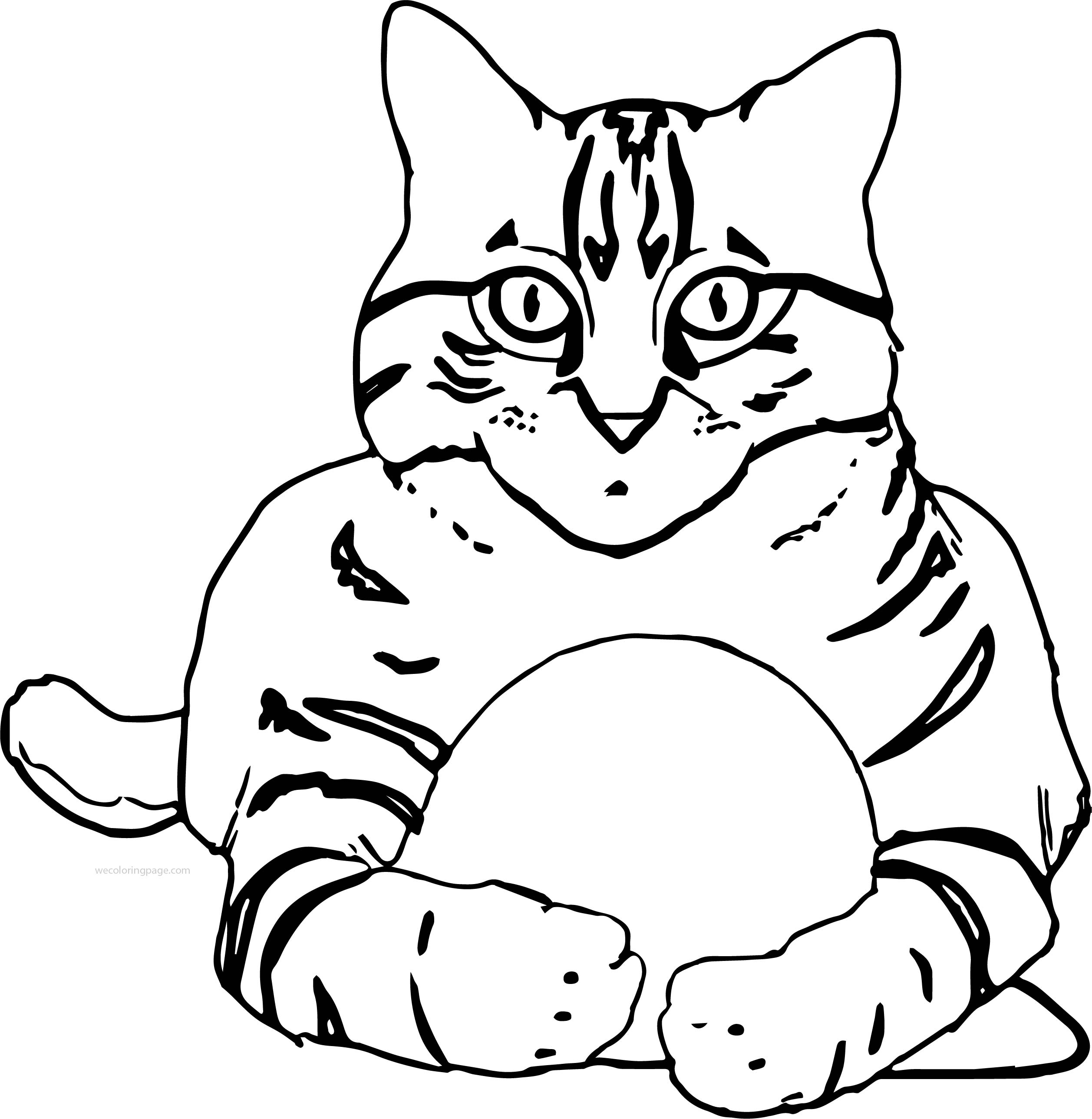 Cat Front View Coloring Page