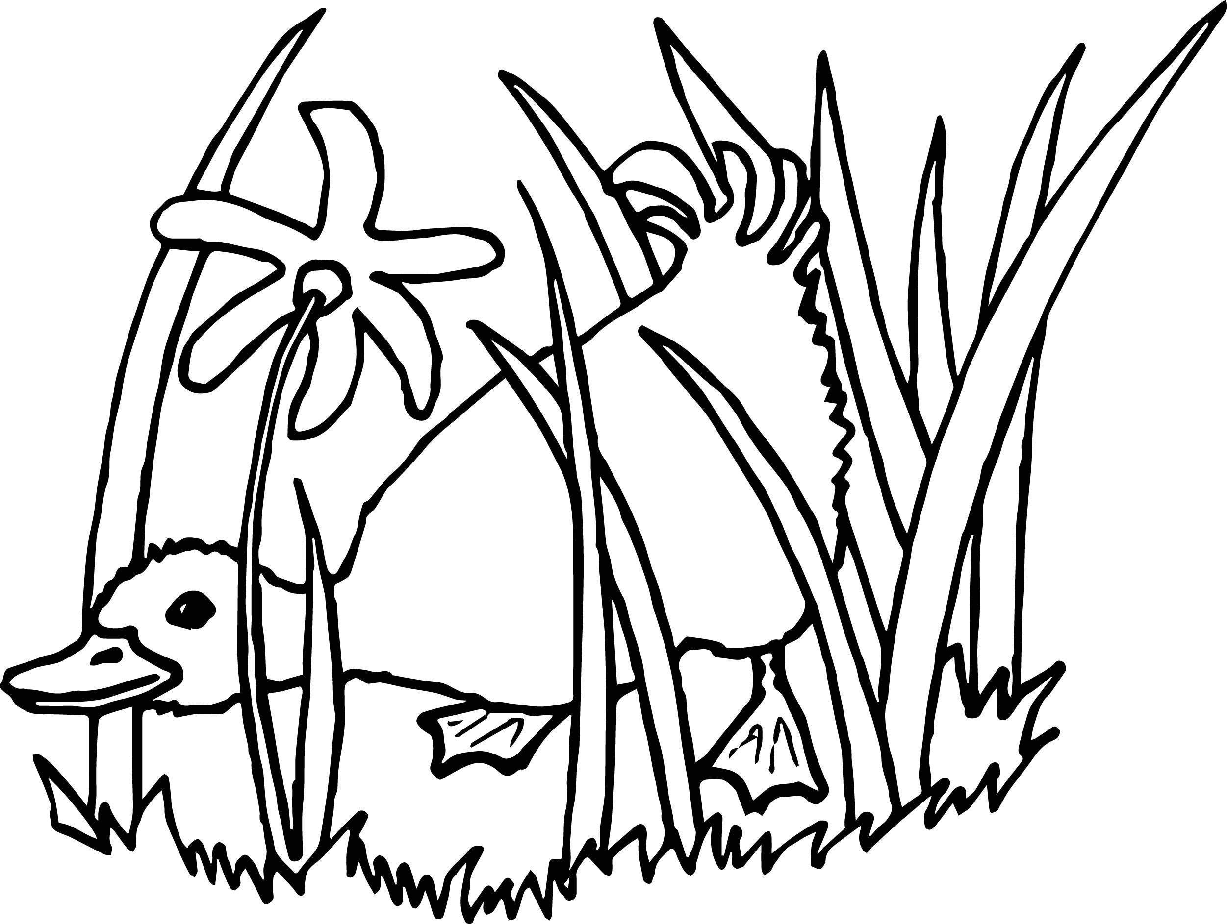 Duck Hiding Coloring Page