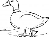 Duck Walking Coloring Pages