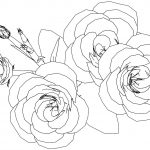 Flower Roses Coloring Page