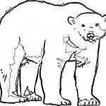 Follow Bear Coloring Page