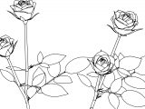 Four Rose Coloring Page