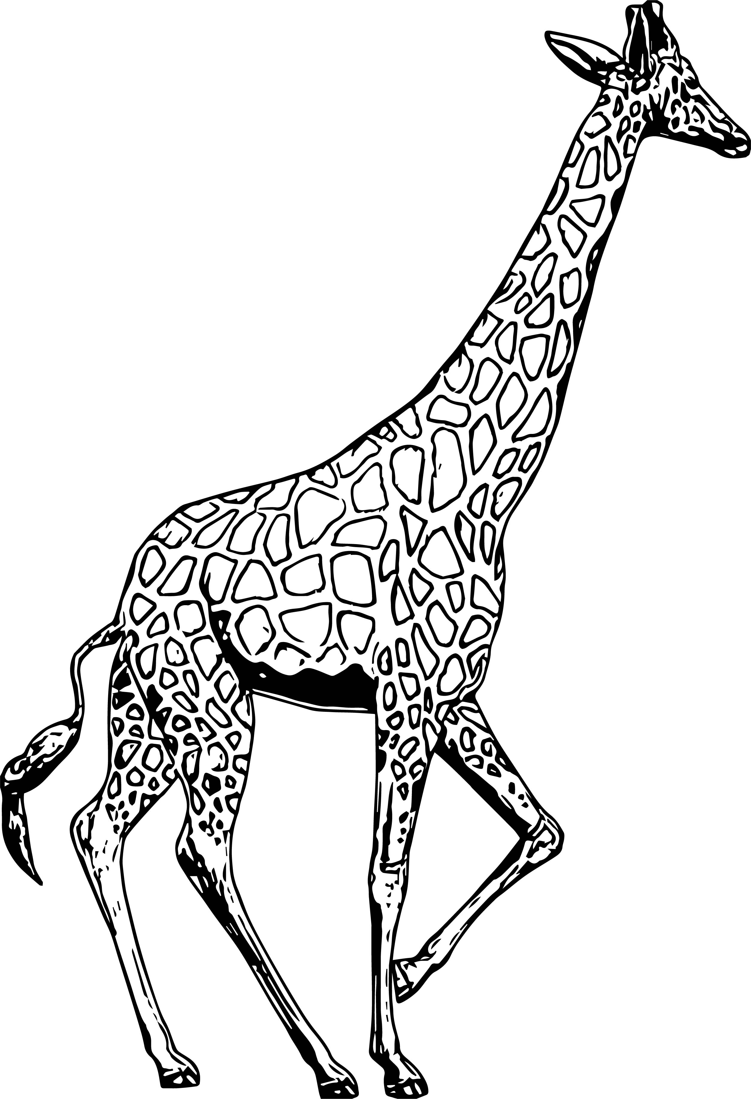 Giraffe Turn Back Coloring Page