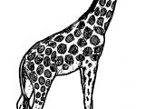 Giraffe Vintage Coloring Page